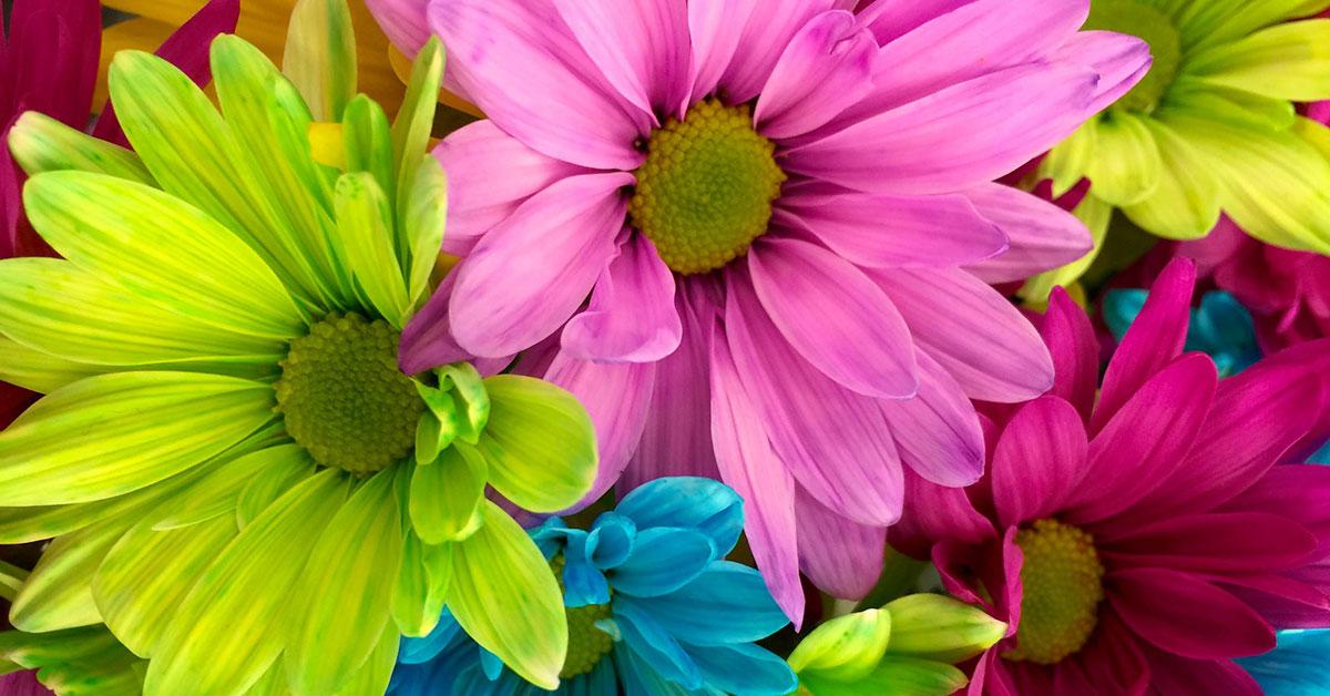 Bloemen Groothandel