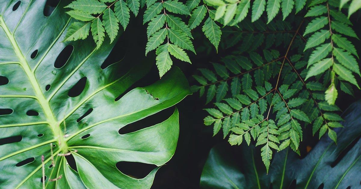 Groothandel planten